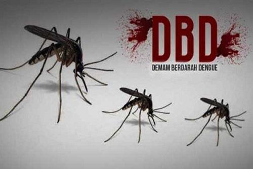 Diskes Pekanbaru Catat 380 Kasus DBD di 12 Kecamatan